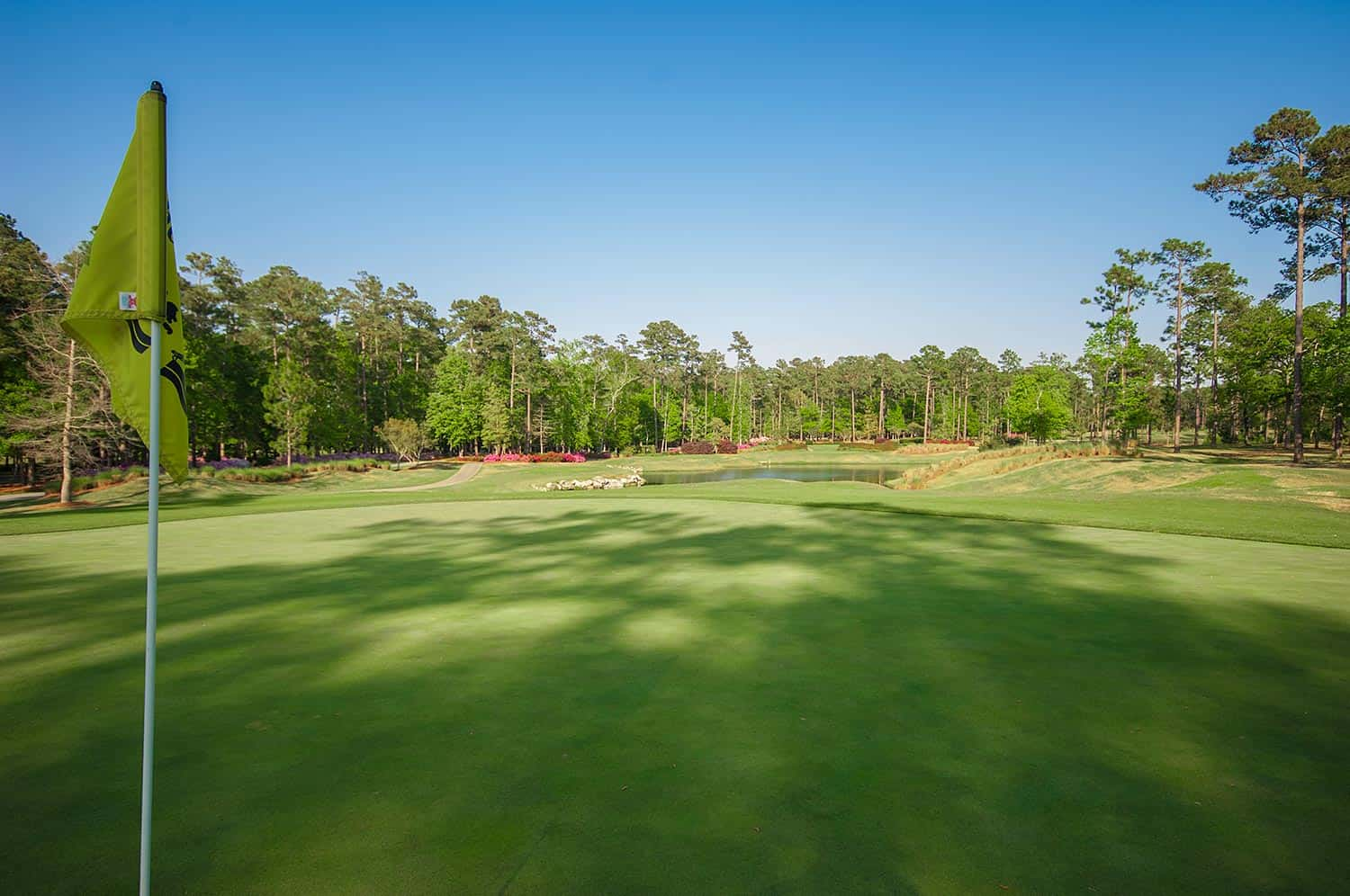 Ocean Ridge Plantation-tiger's-eye